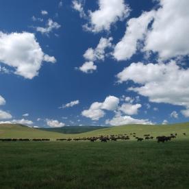 African buffalo welcome us to the Ngorongoro Crater.