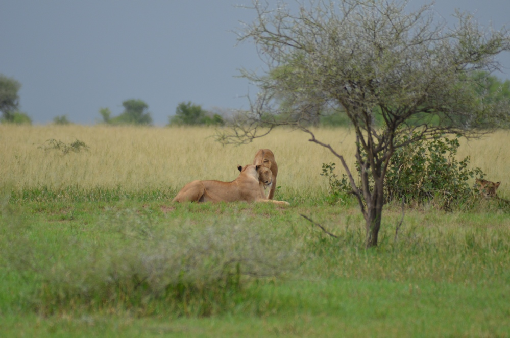 Seeing Africa's Big Five (4/6)