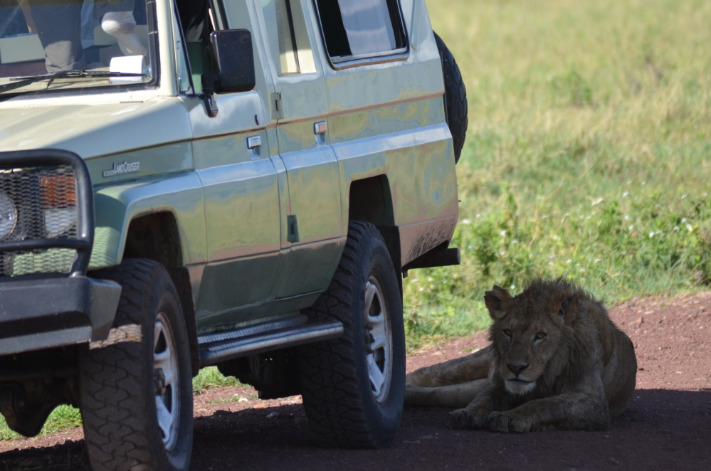 Seeing Africa's Big Five (5/6)