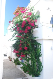 Bougainvillea cascade down a whitewashed wall in Batsi, Greece.