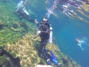 Amanda diving