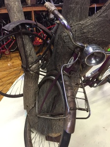 Bikes Trapped in Trees